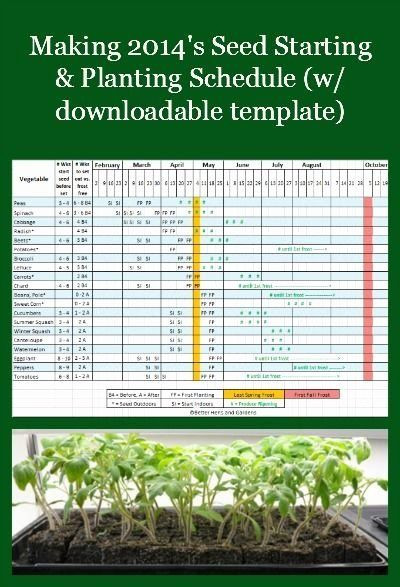 Plant Feeding Schedule Template Pin On Examples Daily Work Plan Templates