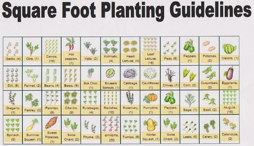 Square Foot Garden Planting Template Laying Out Your Square Foot Garden Good Morning From the