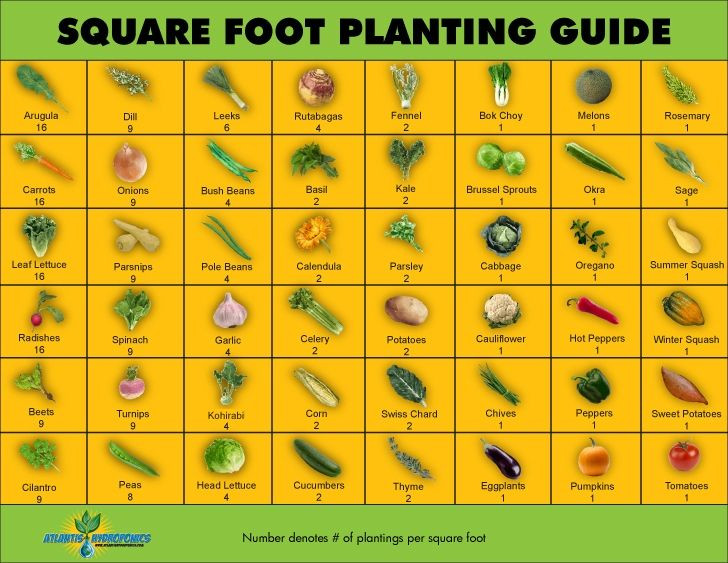 Square Foot Garden Planting Template Square Foot Gardening A Garden for Everyone