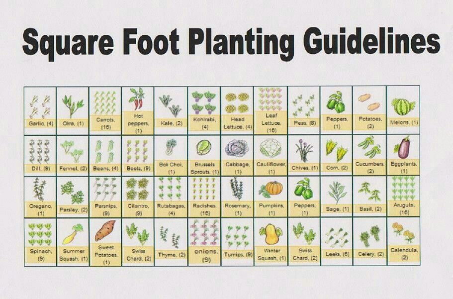 Square Foot Garden Planting Template Square Foot Planting Guides